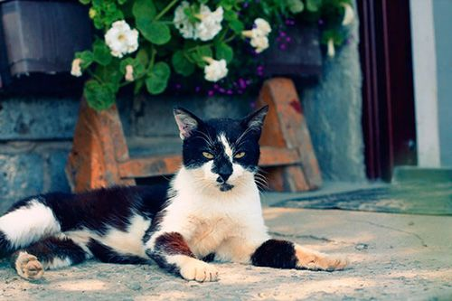 hotel dla kotów